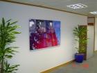 Actylic Wall Display